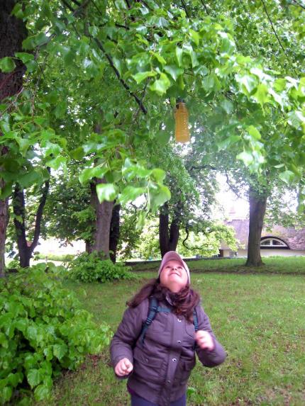 Benzer_Brausebaum_Usedom_2010_05_27_Foto_Elke_Backert