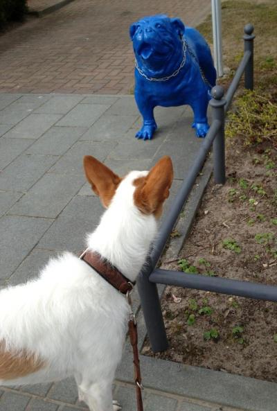 Bild 35 Binz - Auch für die Unterhaltung der Hunde ist gesorgt