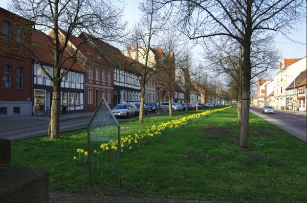 Bild 9 Stendal -Blumenrabatten