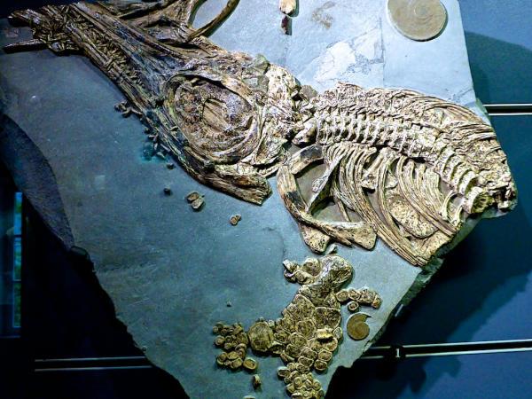 Fossilien_Luxemburg_2015_05_16_Foto_Elke_Backert