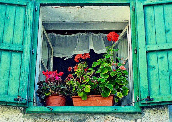 Friaul Blumenfenster