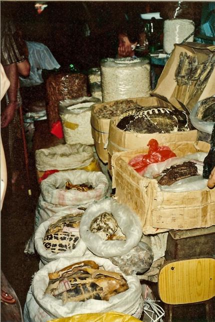 Lebesnmittelmarkt in Guangzhou