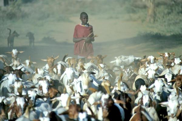 Maasai mit Ziegen-7-600