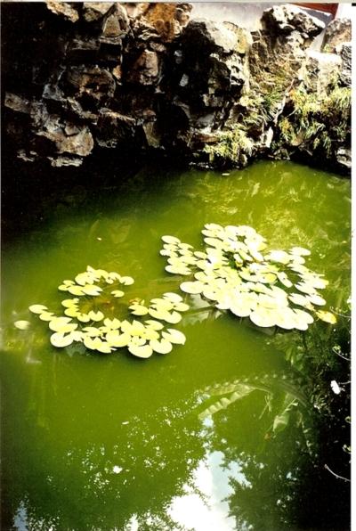 oase-der-stille